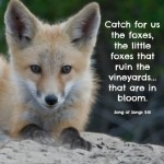 Catch for us the foxes... Song of Songs 2:15