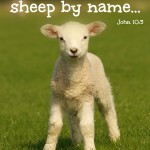 He Calls His Own Sheep By Name John 10.3