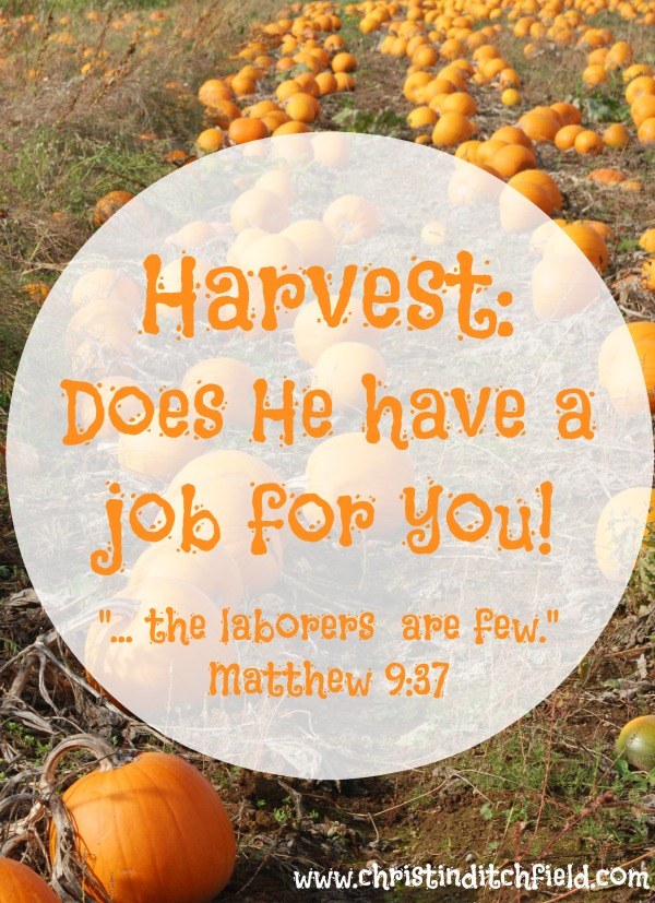 Harvest Does He have a job for you
