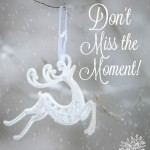 Don't Miss the Moment by Christin Ditchfield